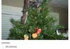 Skyrim Christmas