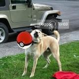 PoGo the Doggo