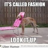 Funny dog fashion meme