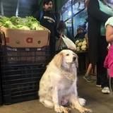 This dog looks like Danny DeVito